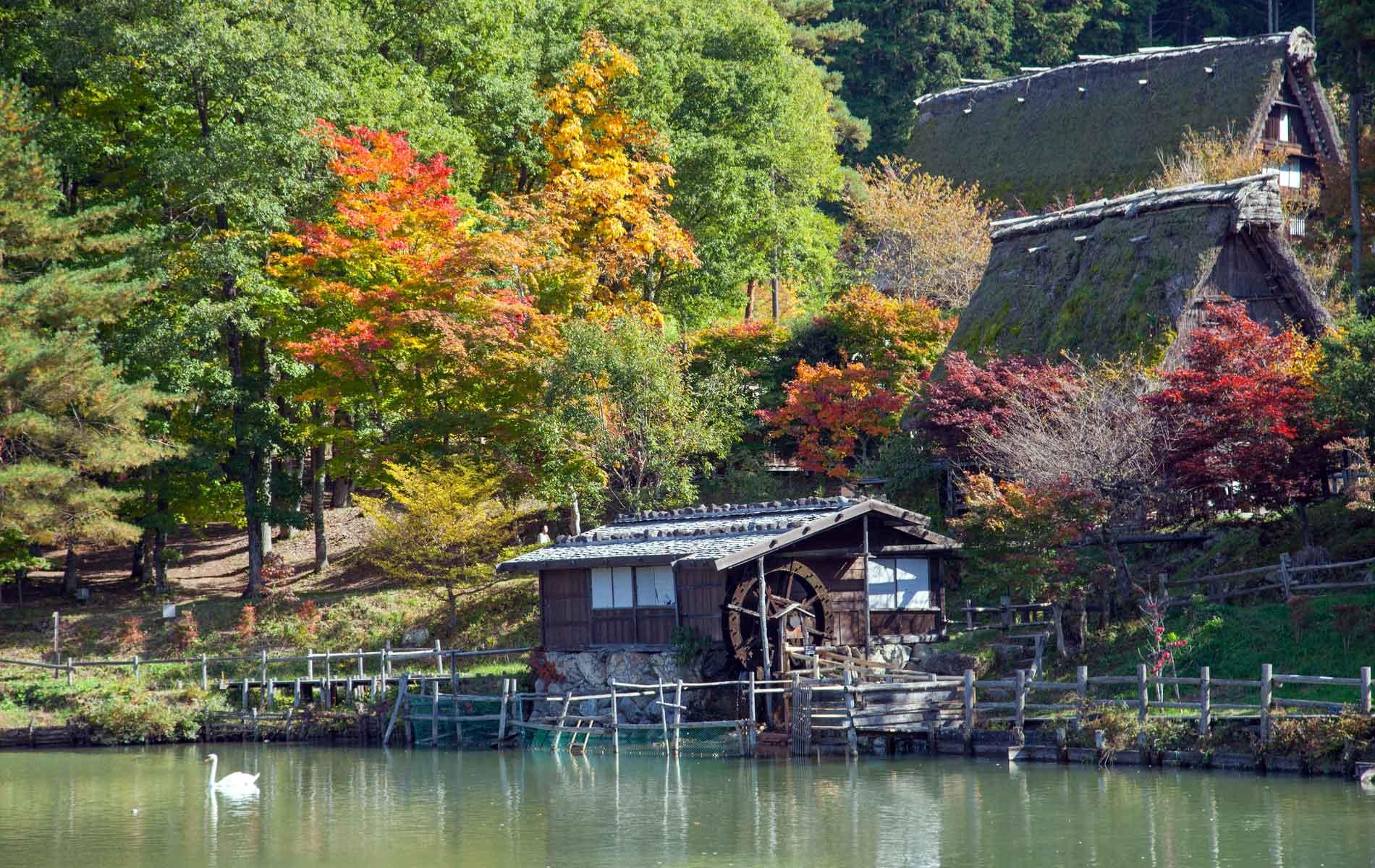Colorful autumn trees in Hida Folk Village, Takayama, Japan