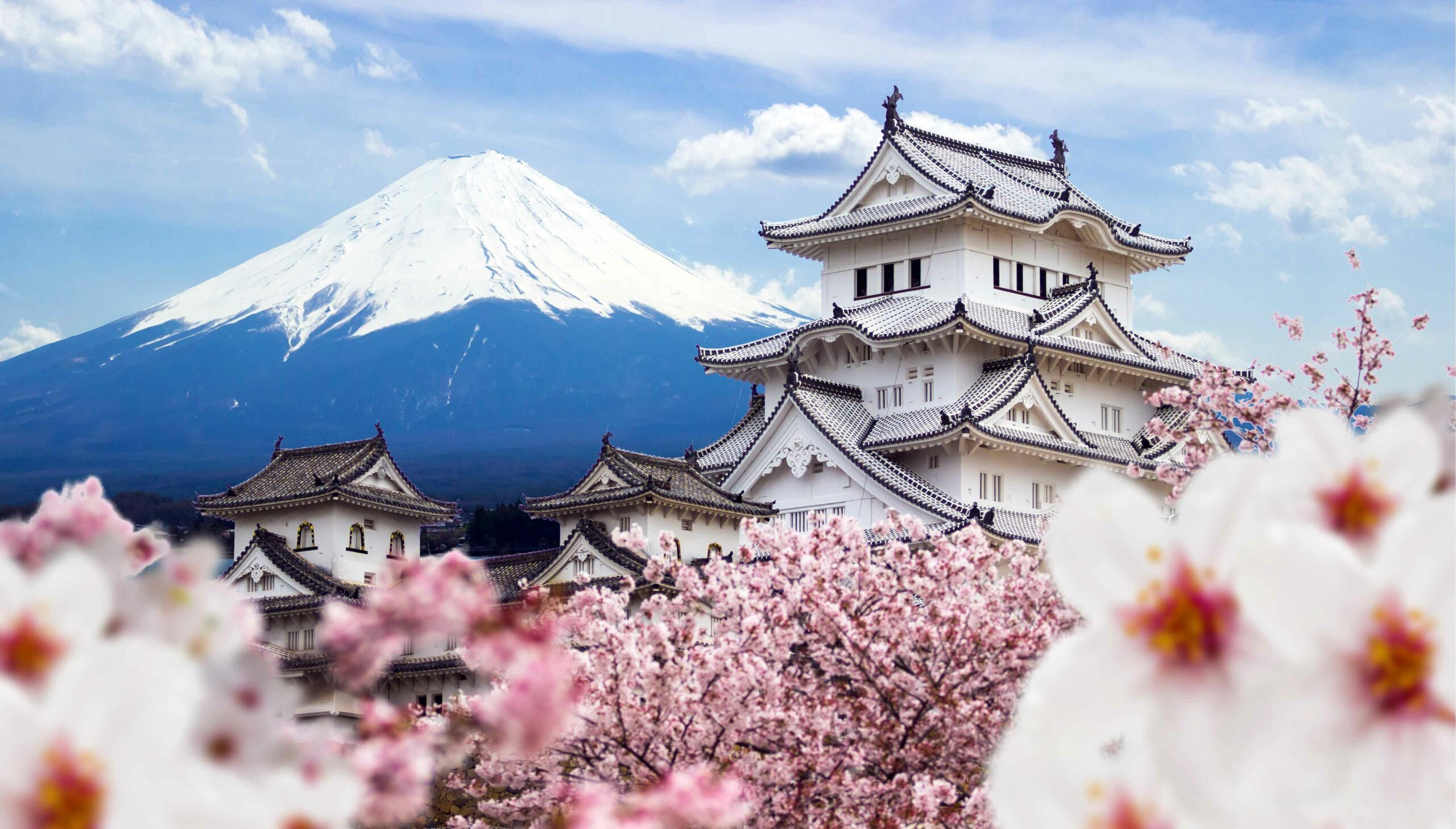 Himeji Castle with cherry blossoms in front of Mount Fuji