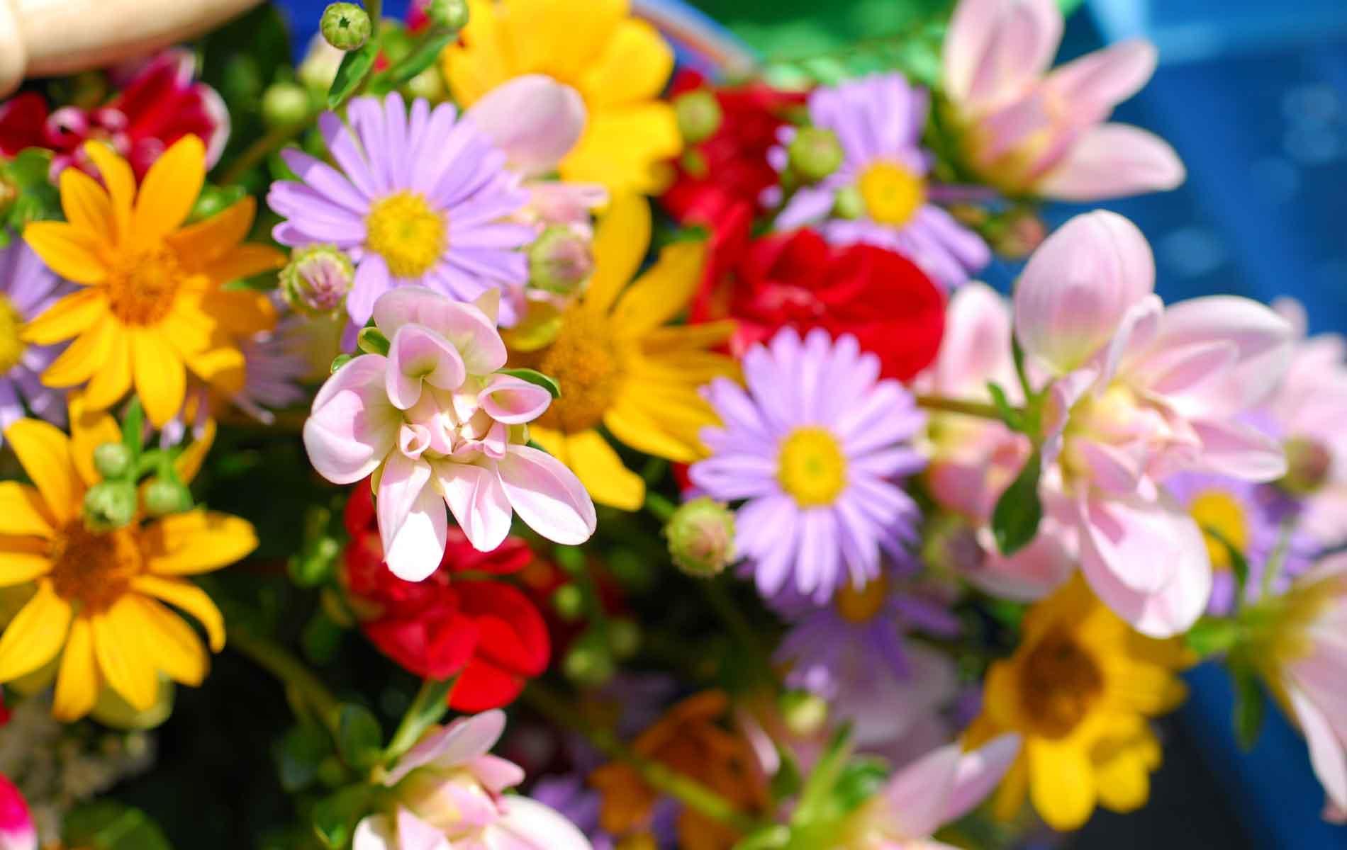Flowers from a market in Takayama, Japan