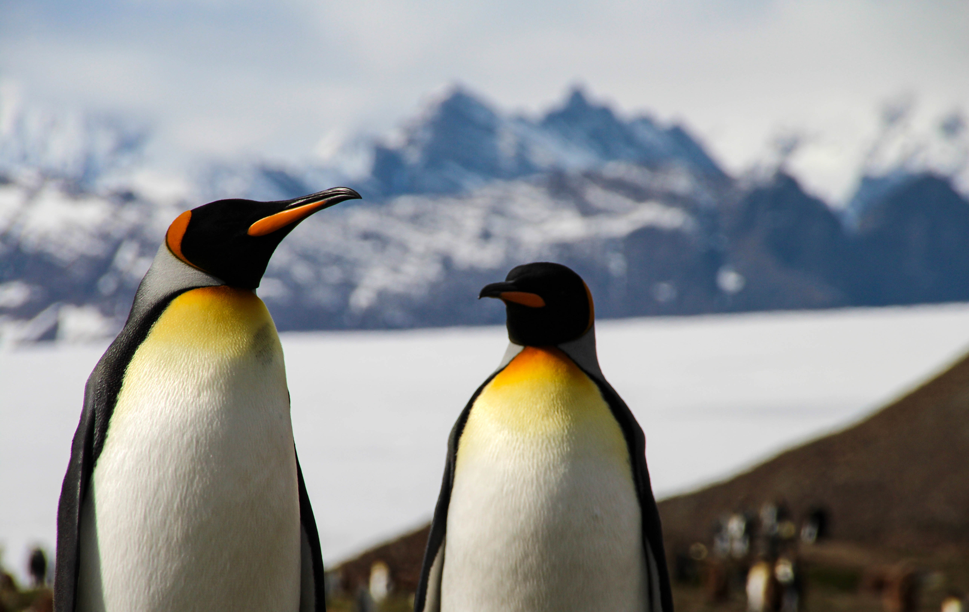 Penguin inhabitants of Antarctica