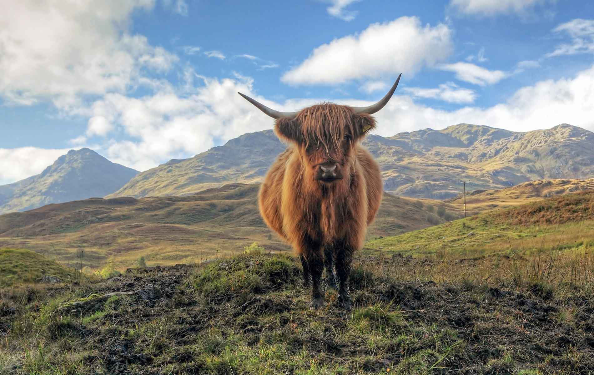 Many A Vowel Makes A Muddle: How Scottish English Is A Whole New Language
