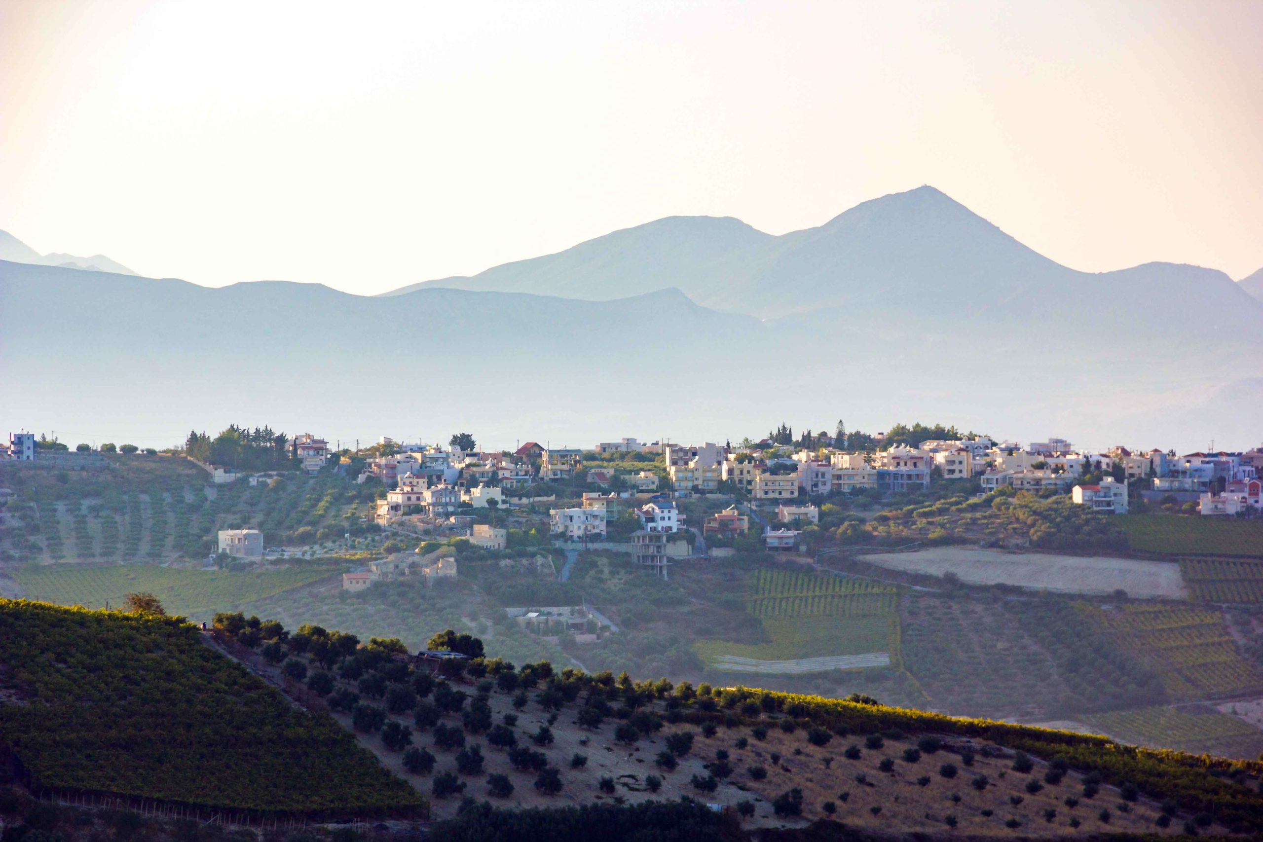 Canva---Vineyards-&-Olive-Trees-Near-The-Heraklion,-Capital-City-of-Crete,-Greece