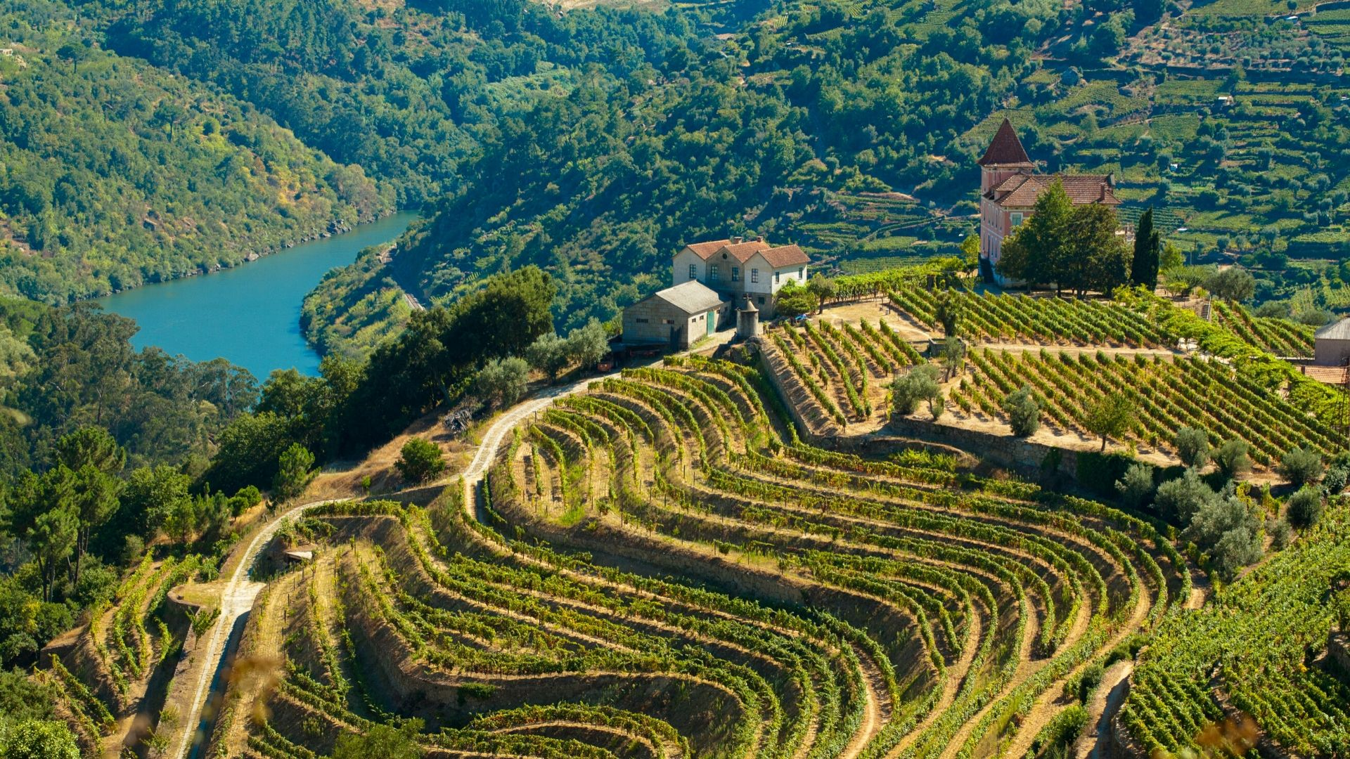 Terraced vineyards in the Douro Valley In Portugal