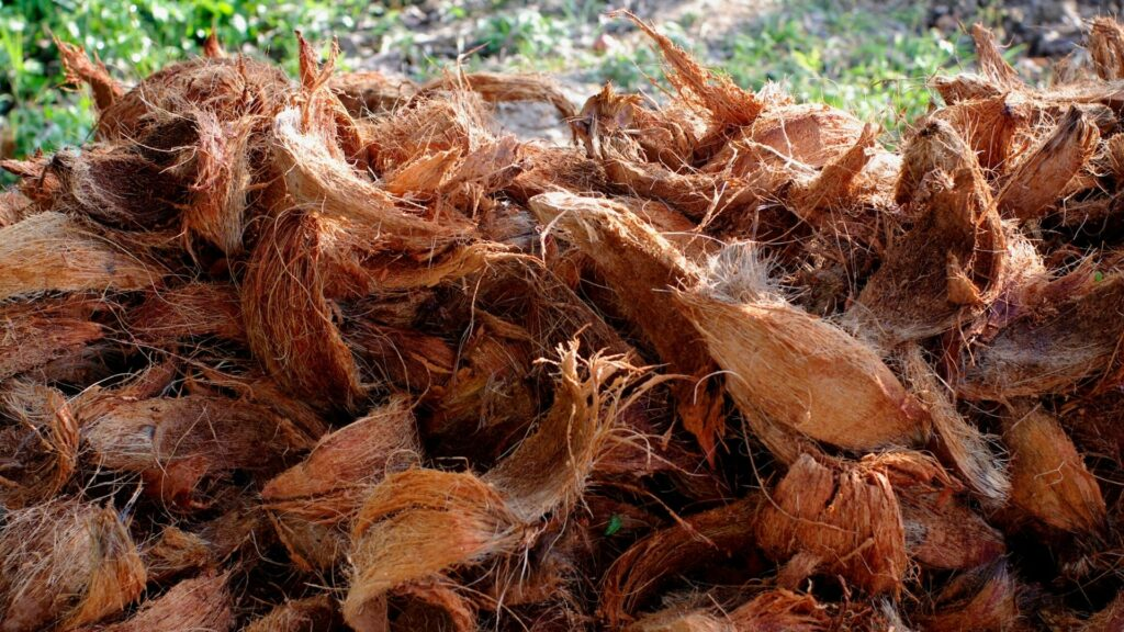 Coconut coir used for fertilizer