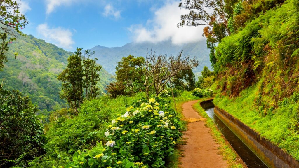Beautiful natural scenery along one of Madeira's levadas