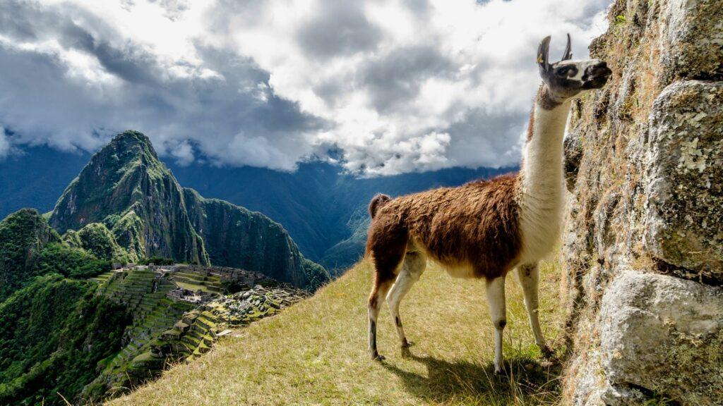 A local resident near Machu Picchu