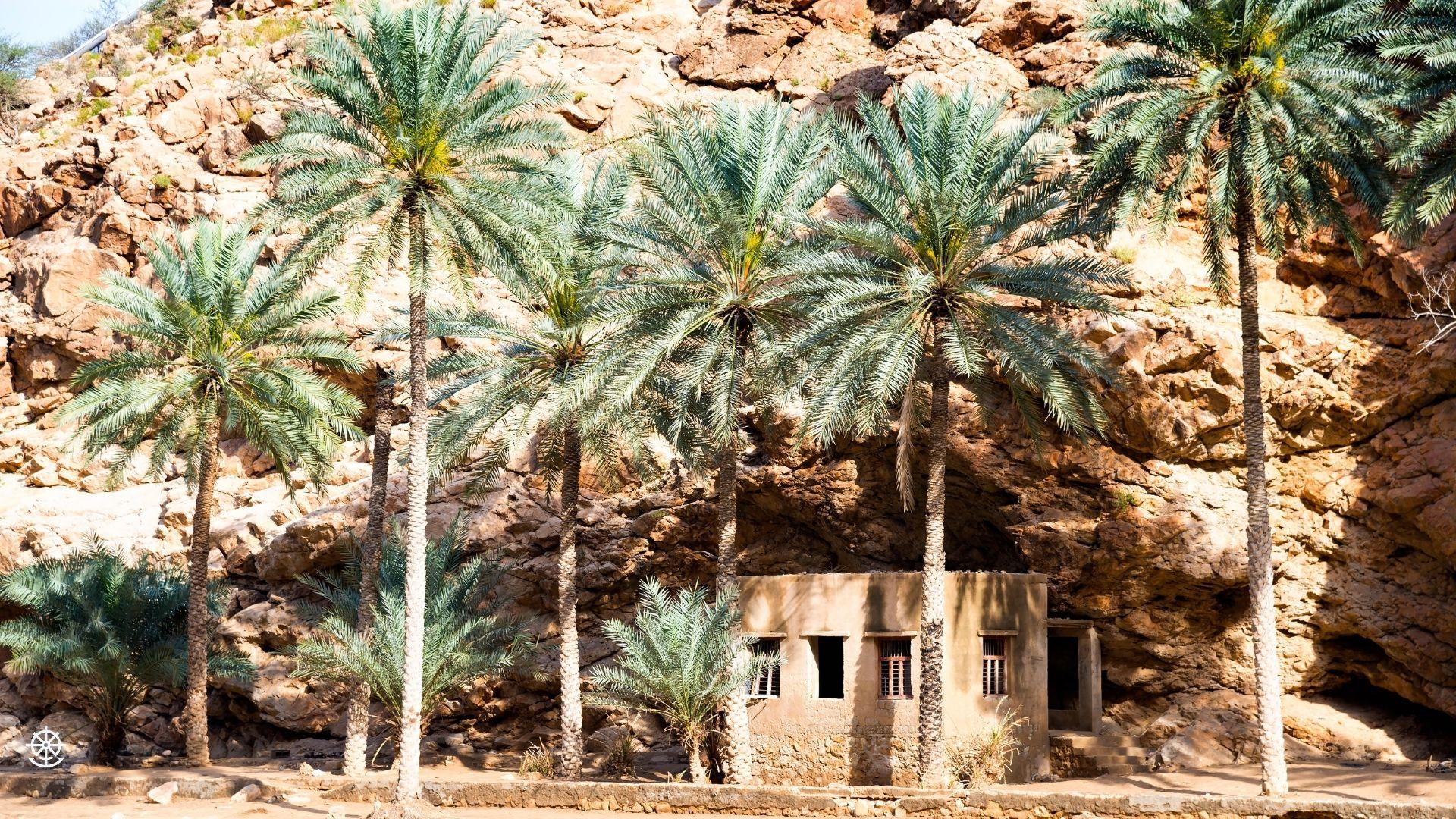 Wheel & Anchor Oman-5